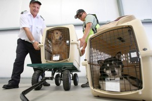 Як вивезти тварину за кордон