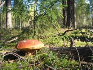 Рельєф та рослинний світ Польщі